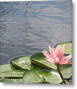 Lily Metal Print by Kevin Croitz