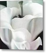 Lily Kiss Reflection Metal Print