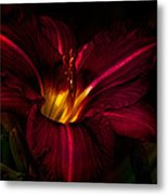 Lily Number Nine Metal Print