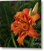 Lily Of Lilies  Metal Print