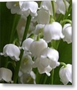 Lily Of The Valley 3 Metal Print