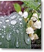 Lily Of The Valley After The Rain Metal Print