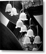 Lily Of The Valley Black And White Metal Print