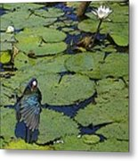 Lily Pad With Bird2 Metal Print