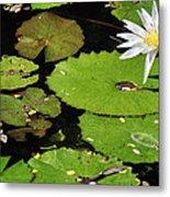 Lily Pads And Lotus Flower Metal Print