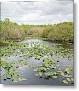 Lily Pads Floating On Water, Anhinga Metal Print