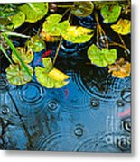 Lily Pads Ripples And Gold Fish Metal Print