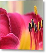 Lily Photo - Flower - Rusty Red Metal Print