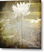 Lily Reflections Metal Print