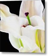 Lily Solitaire Metal Print