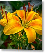 Lily Sunshine Metal Print