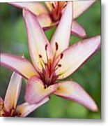 Lily One Metal Print