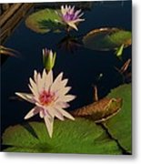 Lily White Monet Metal Print
