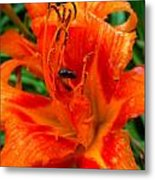 Lily With A Friend Metal Print by Mark Malitz
