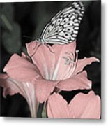 Lily With Butterly  Metal Print