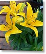 Lily Yellow Flower Metal Print
