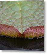 Lilypad Abstract Metal Print