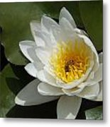 Lily's Sweet Visitor Metal Print