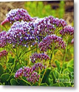 Limonium - Statice Metal Print by Artist and Photographer Laura Wrede