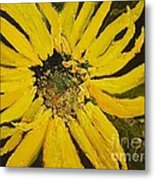 Linda's Arizona Sunflower 2 Metal Print