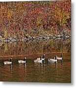Line Of Geese On The Quinapoxet River Metal Print