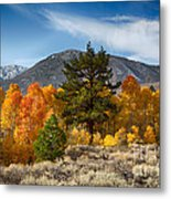 Line Of Trees At Lake Lundy Metal Print
