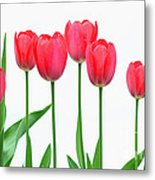 Line Of Tulips Metal Print