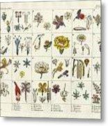 Linne's Plant System Metal Print