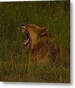 Lion   #1050 Metal Print