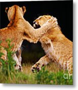 Lion Cubs Playing In The Grass Metal Print