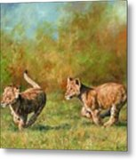 Lion Cubs Running Metal Print