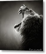 Lion Displaying Dangerous Teeth Metal Print