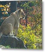 Lion In Autumn Metal Print