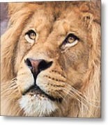 Lion In Deep Thought Metal Print