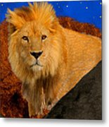 Lion In The Evening Metal Print