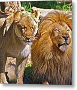 Lion Mates Metal Print