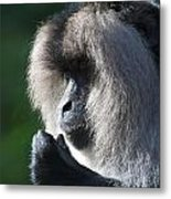 Lion Tailed Macaque Metal Print