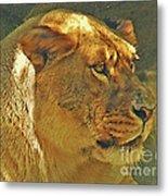 Lioness 2012 Metal Print