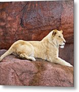 Lioness On A Red Rock Metal Print