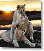Lioness Protector Metal Print