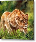 Lioness Stalking Metal Print
