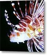 Lionfish 3 Metal Print