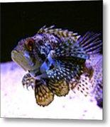 Lionfish Dendriochrius Barberi Metal Print by Karon Melillo DeVega