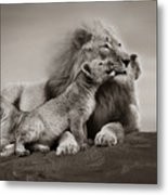 Lions In Freedom Metal Print