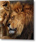 Lions In Love Metal Print by Emmanuel Panagiotakis
