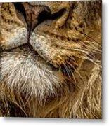 Lions Mouth 2 Metal Print