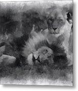 Lions Photo Art 01 Metal Print