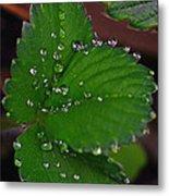 Liquid Pearls On Strawberry Leaves Metal Print