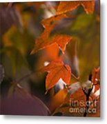 Liquidambar Autumn Metal Print