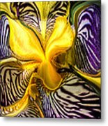 Liquified Orchid Metal Print